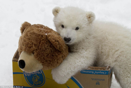 英国《每日邮报》登出一组超萌照片,来看看可爱小动物们与圣诞礼物的