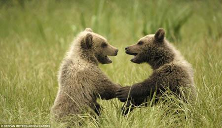 【趣闻】动物世界也有浪漫情侣秀恩爱